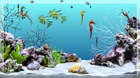 Disney Aquarium Background